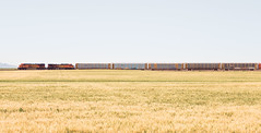 Split View (The New No. 2) Tags: greatnorthernrailway johncrouch copyright2018johncrouch johncrouchphotography 2018 northerntranscon unitedstates allamerican americanwest beautiful beauty blue bnsf color countryside distance field grain horizon industrial landscape montana montanalandscape nature outdoor rail railroad railroadtracks railway roadtrip rural scenery sky summer tracks train transport transportation travel vacation havre us