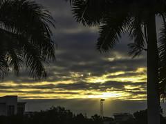 Good Morning Sarasota (soniaadammurray - On & Off) Tags: digitalphotography morning dawn sunrise sky clouds trees architecture school stadiumlight shadows reflections nature martedidinuvole martesdenubes nwn nicewonderfultuesdayclouds artchallenge sarasota florida usa