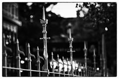 Saint-Valery-sur-Somme. France. Protection Rapprochée.  © Dom Janasz (Dom Janasz) Tags: noiretblanc blackwhite bw baiedesomme pentaxart pentaxlife pentaxlimited smc artinbw