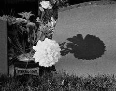 Eternal Love - Light and Shade (Gilli8888) Tags: nikon p900 coolpix northeast northumberland newbigginbythesea newbiggin black white light shade gravestone flower blackandwhite cemetery gravestones woodhorn woodhornvillage