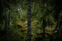 Old lands (Klas-Herman Lundgren) Tags: dalarna sweden gimmen autumn höst forest trees skog october green grön pine granskog granar mossa moss sifferbo se