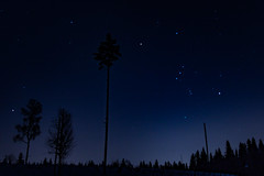 Orion's Belt (langdon10) Tags: countryside norway rotnes forest nighttime snow stars trail tree winter