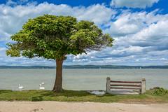 Balaton (Lake Balaton in Hungary) (The Cuman) Tags: nikon nikond7100 sigma sigma1770mmf284dcmacrooshsm werner lake water hungary balaton tree windy balatonszárszó