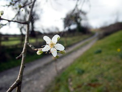 P2180007 (Photopedaler) Tags: blossom ruralscenes countryside
