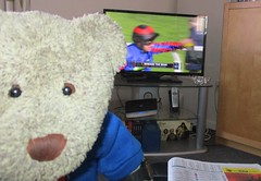 [4] BEWARE THE BEAR! M'off to colleck me winnins'! (pefkosmad) Tags: tedricstudmuffin teddy ted bear animal toy cuddly fluffy cute plush soft stuffed hrorse racing jumps jumping race cheltenham 250 ultimahandicapchase gloucestershire handicap 101 notthefavourite winner win cheltenhamfestival television
