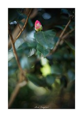 2019/2/10 - 15/15 END. photo by shin ikegami. - SONY ILCE‑7M2 / Voigtlander NOKTON CLASSIC 40mm f1.4 SC VM (shin ikegami) Tags: asia sony ilce7m2 sonyilce7m2 s7ii 40mm voigtlander nokton nokton40mmf14sc tokyo photo photographer 単焦点 iso800 ndfilter light shadow 自然 nature 玉ボケ bokeh depthoffield naturephotography art photography japan earth