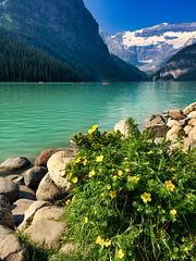 Lake Louise, Alberta (Jim 03) Tags: lake louise banff national park alberta canadian rockies turquoise glacier peaks chateau blue sky water jim03 jimhoffman jhoffman jim wwwjimahoffmancom wwwflickrcomphotosjhoffman2013