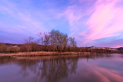 Pink Sunset (albertocali) Tags: blue cloud clouds dramatic evening grass lake landscape light mysterious nature outdoors panorama pink plant romantic scenic sky sun sunset tree trees water