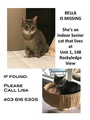 LOST gray tabby in #RockyRidge condos near Crowchild Trail NW. 403-616-5305.pls rt watch share to help find Bella YYC Pet Recovery shared a post. Missing since approximately 10 pm March 28th in Rocky Ridge condos near Crowchild Trail NW. Bella is a senior (yycpetrecovery) Tags: ifttt march 30 2019 0111am