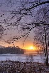 """Sun and Snow"", Norway (Vest der ute) Tags: xt2 winter norway rogaland haugesund snow sunrise trees ice eivindsvatnet fav25 fav200"
