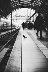 Central bird (mripp) Tags: frankfurt trainstation blackandwhite bnw monochrome bnwcaptures bnwmood bwlovers bnwoftheworld monochromatic iroxbw igersbnw instapickbw worldbnw noirstreetlife bwlife monoart noir instablackandwhite bwsociety greyscale bnwperfection bnwphotos