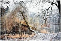Schlossteich (r.wacknitz) Tags: salzgitter ringelheim schlosspark winter frost fog nebel nikond3400 niedersachsen tamron18200 nikcollection