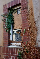 Unfriendly takeover (frankdorgathen) Tags: xf10 fujifilm fassade facade stein brick stone mundane ivy efeu gebäude building haus house hochdahl erkrath