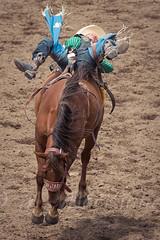 Calgary Stampede 2016 (tallhuskymike) Tags: calgary stampede event calgarystampede cowboy horse 2016 rodeo outdoors greatestoutdoorshow prorodeo action alberta