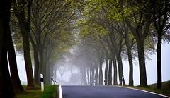 Foggy (r.wacknitz) Tags: vorharz harzvorland allee street fog april tree niedersachsen nikond3400 tamron18200 luminar18