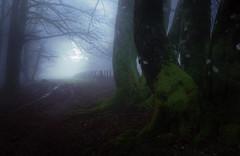 Lindux (arbioi) Tags: bosque canon eos40d euskalherria frio paisaje montaña montañas navarra naturaleza nafarroa nieblas urepel sorogain burguete orreaga roncesvalles ibañeta