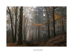 such a sad sad day (Zino2009 (bob van den berg)) Tags: cold freezing misty nebel wald forest sad morning walk wet trees standing lateautumn autumn fall leaves lastones yellow gold upon tree trunk composition holland november