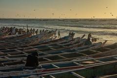 Crowded beach (s_andreja) Tags: mauritania nouakchott sunset sea ocean people boat fishermen sky water bird fishing