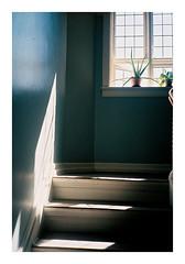Copenhagen, 2018 (csinnbeck) Tags: analog film copenhagen cph denmark summer 2018 staircase cactus window olympus xa xa2 fuji fujicolor fujifilm c200 light shadow olympusxa2 35mm