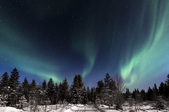 Z19_0209 LT (Zoran Babich) Tags: lapland lappi finland suomi winter night snow landscape auroraborealis northernlights trees