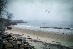 The Sound (JMS2) Tags: scenic texture fog shore beach rocky longislandsound rye landscape seascape