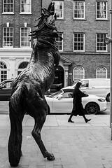 horse (99streetstylez) Tags: streetphotography strassenfotografie streetphoto 99streetstylez
