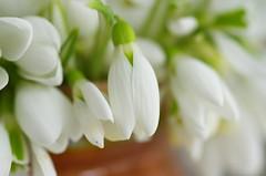 Spring time (Baubec Izzet) Tags: baubecizzet pentax bokeh flower white flickrunitedaward
