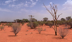 Outback panorama (OzzRod) Tags: pentax k1 hdpentaxda2040mmf284 stitch panorama grazing desert shrubland barren drought red soil wilcannia westernnsw dailyinmarch2019