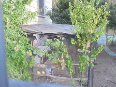752 (en-ri) Tags: giardino garden gabbia cage marrone verde foglie leaves sony sonysti
