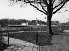 walkaround (Ernst-Jan de Vries) Tags: mamiyam645j mamiya adox mediumformat mittelformat middenformaat analoog analogue film bw zw sw ommen vecht overijssel tree boom sidewalk voetpad infrastructure expired rodinal r09 150