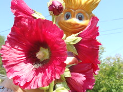 Peek A Boooo ..  Make You Smile ? (Mr. Happy Face - Peace :)) Tags: floral gardening red smile flower garden summertime funpic macro art