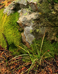 Mossy Rock With LIchen (arbyreed) Tags: arbyreed close closeup lichen rock detail plant texture symbiosis sandstone