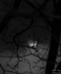 IMG_6698 (skylarpaigephoto) Tags: moon night sky trees dark canon canon60d 300mm midnight lunar silhouette glow clouds fog eerie nature skylarpaigephoto