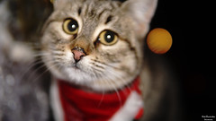 Merry Christmas my friends!!! (Αλκμήνη) (Jouvounou) Tags: cat animals streetcat lobby bar christmas sonyalpha sony a6000 sonya6000 sigma3014 sigma artphotography nature nofilters cafe greece alkmini beautifulcat merrycristmas happynewyear