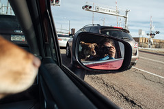 Stella and me (M///S///H) Tags: 24mmf14 lenstagger canine canonfd canonfd24mmf14 car dog mirror newmexico nm pupper puppy santafe selfportrait selfie sonya7riii stella