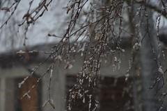 Lumi Rakveres (anuwintschalek) Tags: nikond7200 18140vr talv winter january eesti estland estonia rakvere lumi schnee snow 2019 lumesadu tuisk schneefall snowfall