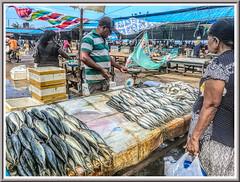 Fresh fish (Immagini 2&3D) Tags: fishmarket negombo srilanka