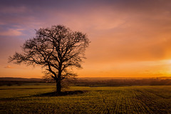 Evening Light a few minutes later (Jez22) Tags: lone lonely tree field sundown sunset fadinglight color colour bright orange dusk rural kent england woodchurch branches sillhouette copyright jeremysage