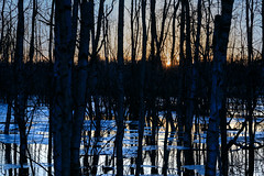 Flooded forest (Antti Tassberg) Tags: puu landscape pitkäjärvi auringonlasku metsä reflection silhouette tulva kevät espoo suomi järvi aurinko finland forest lake scandinavia spring sun sundown sunset tree