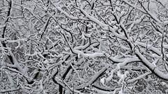 Labyrinth (superhic) Tags: winter snow tree branches branch zima sneg grane