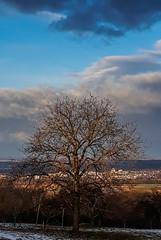 View from my terrace (Fay2603) Tags: sight landscape germany deutschland badenwürttemberg schabenland schwäbisch gmünd aussicht sky himmel cielo wolken nuvole clouds blue blau azurro azure tree baum albero arbre view