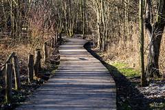 20190216-045 (sulamith.sallmann) Tags: natur weg brandenburg deutschland europa holz hoppegarten hönow märkischoderland naturmaterial sulamithsallmann