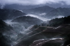 Rice terraces in LongJi. (Massetti Fabrizio) Tags: terrace fields fabriziomassetti fog famasse rural nikond4s 2470f28 guilin guangxi guanxi green cina china landscape landscapes light longsheng mountain mount