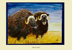 March 2019 (M.P.N.texan) Tags: muskox animal animals acrylic acrylics paint painting calendar art handpainted original mpn