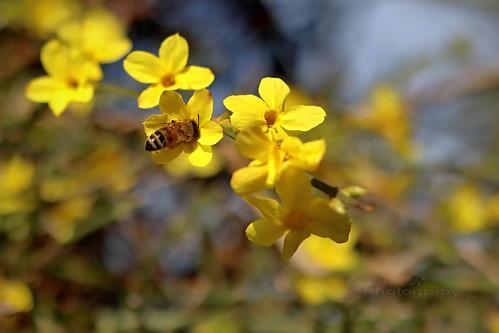 Bee spring flower