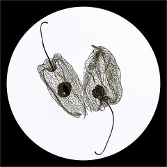 Week 9 Balance (montrealmaggie) Tags: yin yang balance p52