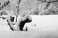 Giant Snowy Squirrel (smir_001) Tags: nature canoneos6dmarkii treetrunk tree flora trees plants britishparks britishgardens bath england somerset bathnes royalvictoriapark botanicalgardens uk winter february snow wintryscene snowing landscape cold blackandwhite bw monotone monochrome white squirrellike winterwonderland wonderland