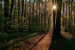 Утро в лесу (prokhorov.victor) Tags: утро природа пейзаж лес деревья солнце