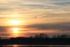 36 (Nils Stolpmann) Tags: landscape nature sea ocean boats yachts clouds sky sun sunrise sunset birds light sunlight nautic