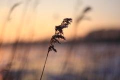 32 (Nils Stolpmann) Tags: landscape nature sea ocean boats yachts clouds sky sun sunrise sunset birds light sunlight nautic